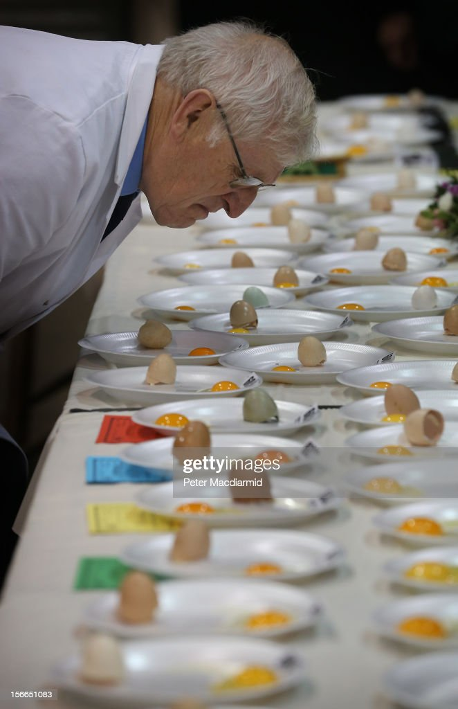 Judge Malcolm Thompson inspects eggs in competition at The National Poultry Show The National Poultry Show on November 17, 2012 in Stoneleigh, England.Thousands of people have attended The Poultry Club's 2012 National Show. The Poultry Club was founded 1877, and was established to safeguard the interests of all pure and traditional breeds of poultry including chickens, ducks, geese and turkeys.