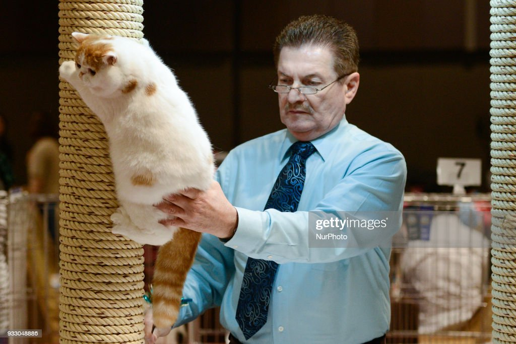CFA International Asia Cat Show 2018