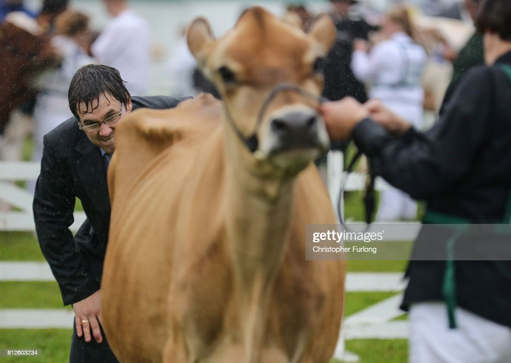 A judge ponders his decision in the cattle show ring on the first day of the Great Yorkshire Show on July 11, 2017 in Harrogate, England. Despite inclement weather on the first day of the annual Great Yorkshire Show visitors flocked to the three day event first held in 1838. The show brings together agricultural displays, livestock events, farming demonstrations, food, dairy and produce stands as well as equestrian events. The popular agricultural show is over three days and celebrates the farming and agricultural community and their way of life.
