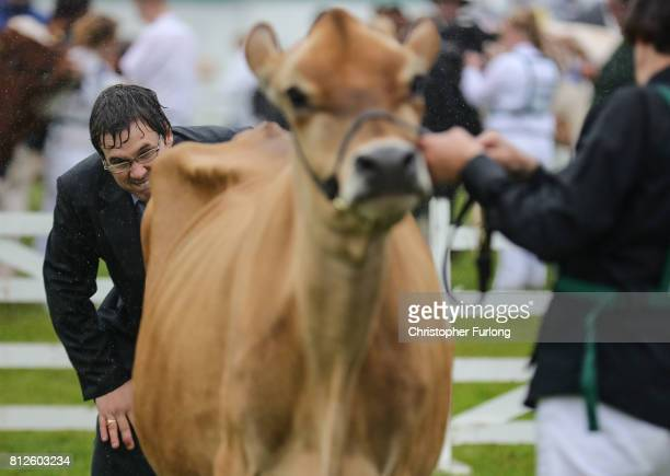 A judge ponders his decision in the cattle show ring on the first day of the Great Yorkshire Show on July 11 2017 in Harrogate England Despite...
