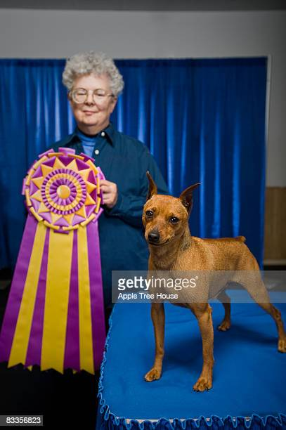 judge with small dog and championship ribbon - dog show stock pictures, royalty-free photos & images