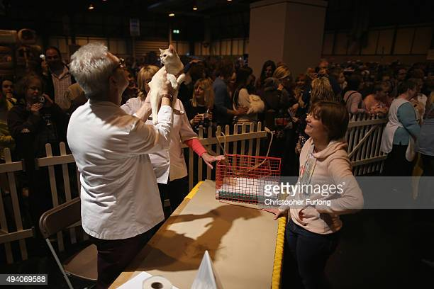 Judges deliberate during the kitten competition at the Governing Council of the Cat Fancy's 'Supreme Championship Cat Show' at the NEC Arena on...