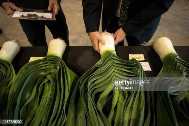 Judges inspect leeks on the first day of the Harrogate Autumn Flower Show held at the Great Yorkshire Showground in Harrogate northern England on...