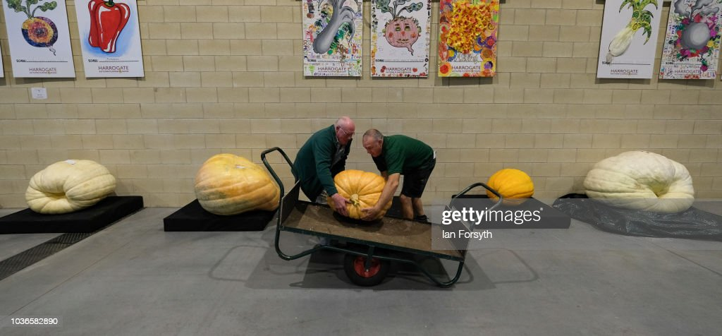 Judges lift a giant pumpkin onto a trolley to be weighed during the giant vegetable competition on the first day of the Harrogate Autumn Flower Show held at the Great Yorkshire Showground on September 14, 2018 in Harrogate, England. Gardeners and horticulturalists from across Britain descend on the Yorkshire Showground every Autumn to show off their prized crops of vegetables, flowers and plants in the hope of a coveted award from the judges. The show which is organised by the North of England Horticultural Society is open to the public from 14-16 September.