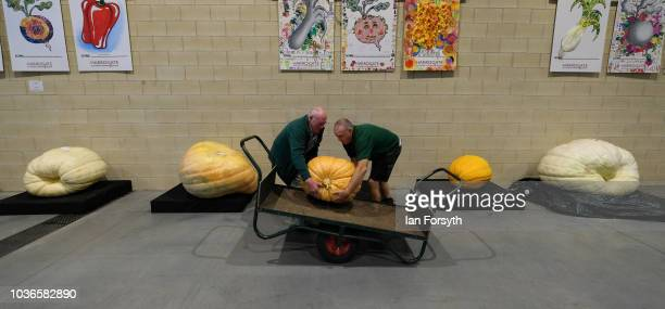 Judges lift a giant pumpkin onto a trolley to be weighed during the giant vegetable competition on the first day of the Harrogate Autumn Flower Show...