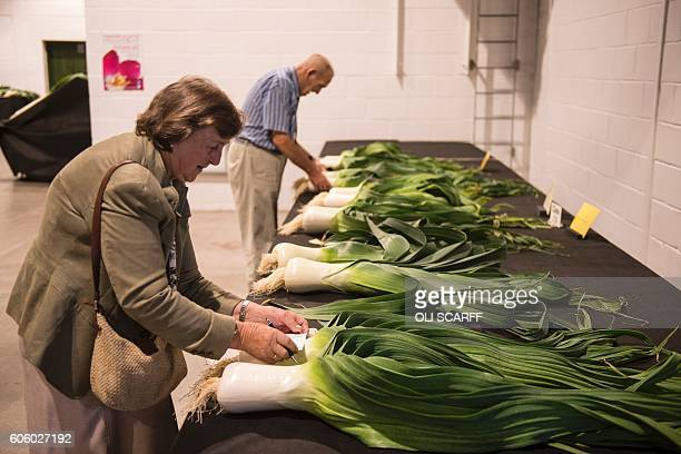 Judges look at giant leeks in the vegetable competitions on the first day of the Harrogate Autumn Flower Show at the Great Yorkshire Showground in...