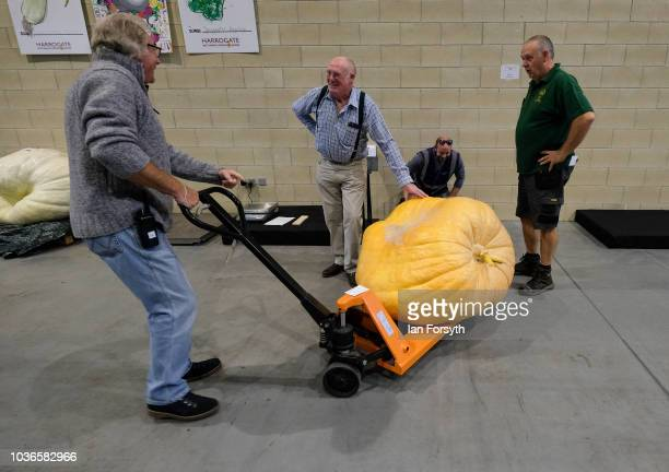 Judges take a break after lifting a giant pumpkin onto a trolley to be weighed during the giant vegetable competition on the first day of the...