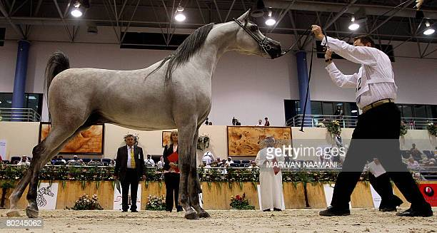 Judges take a look at the Arabian threeyearold colt Baanderos owned by Saudi Prince Khaled bin Sultan bin Abdul Aziz on the second day of the the 9th...