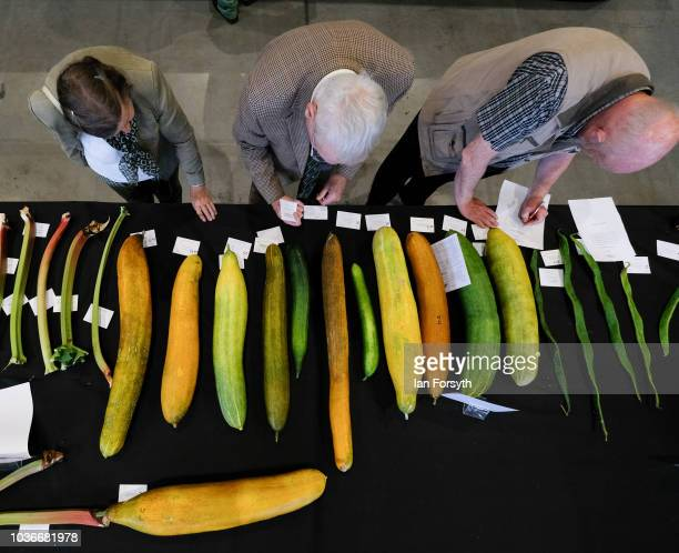 Judging takes place in the cucumber category of the giant vegetable competition on the first day of the Harrogate Autumn Flower Show held at the...