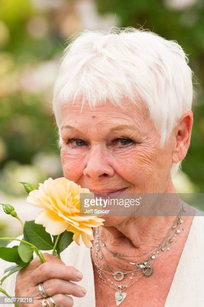 Judi Dench attends RHS Chelsea Flower Show press day at Royal Hospital Chelsea on May 22 2017 in London England