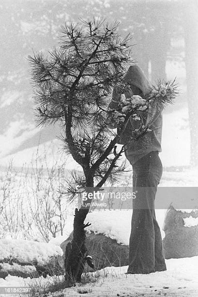 Judy Fiveson, Lakewood, photographs snow on the pine branches of this small tree in Genesee Park. She was not on her photo mission Sunday as heavy,...