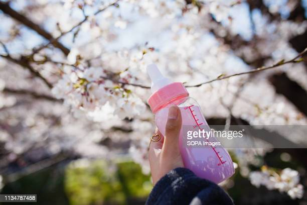 Juice seen in a baby bottle during the Iwakura Cherry Blossom Festival The highlight of the festival is long line of trees created by around 1400...