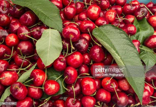 juicy red cherries and green leaves - gary colet stock pictures, royalty-free photos & images