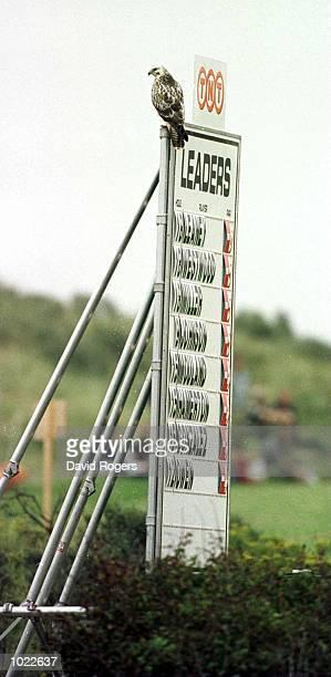 Another eagle on the leader board during the Dutch Open at Noordwijkse Golf club Noordwijke Netherlands Mandatory Credit David Rogers/ALLSPORT