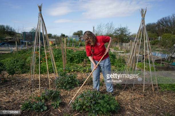 Julia Robinson tends to her allotment and follows government guidelines on social distancing and time restrictions on April 08, 2020 in Saltburn By...