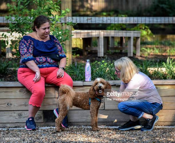 Julia Small right with Finn a golden doodle center and Claire Norris left at a small dog park which is causing some friction between neighbors in...