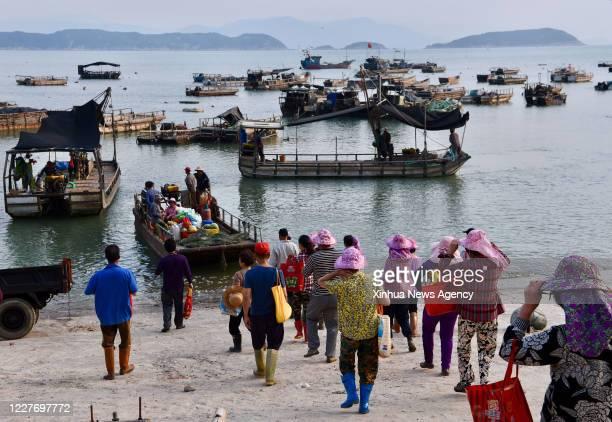 XIAPU July 16 2020 Farmers of Qiuzhugang Village take boat to harvest oysters in Changchun Township of Xiapu County southeast China's Fujian Province...