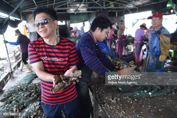 XIAPU July 16 2020 Yu Kaiming a farmer of Qiuzhugang Village displays a triploid oyster on his sorting platform in the sea of Changchun Township in...