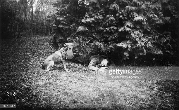 A dog finds a wounded soldier lying under a tree in Austria during World War I