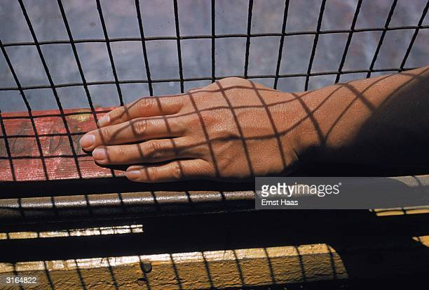A sun tanned hand rests on a window sill crisscrossed by the shadows of wire netting