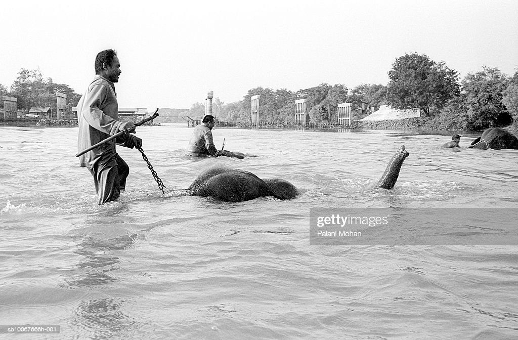 Thailand, Ayutthaya, men crossing river on elephants backs, smiling : Nachrichtenfoto