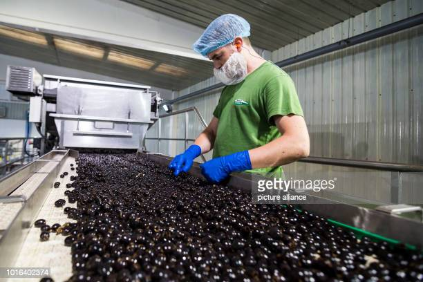 A man works in the production of olives in southern Spain The US Department of Commerce has had antidumping and Countervailing duties on imports of...