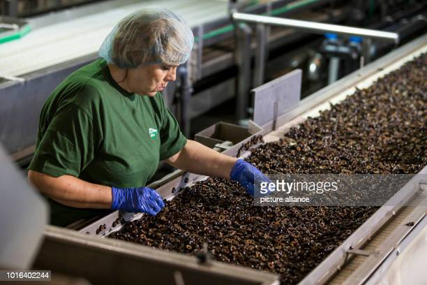 A woman works in the production of olives in southern Spain The US Department of Commerce has had antidumping and Countervailing duties on imports of...