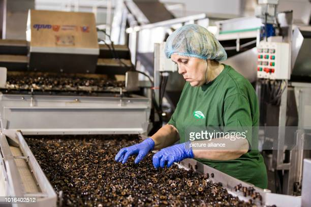 A woman works in the production of olives in southern Spain Imports of this Spanish product into the USA amounted to 577 million euros in 2017 Photo...