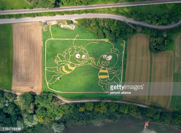 09 July 2019 Bavaria Utting am Ammersee The aerial photograph shows a cultivated plant field on the shore of the Upper Bavarian Ammersee lake in...