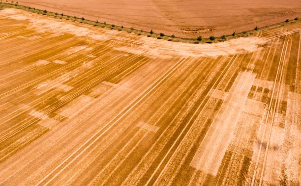 DEU: Grain Harvest