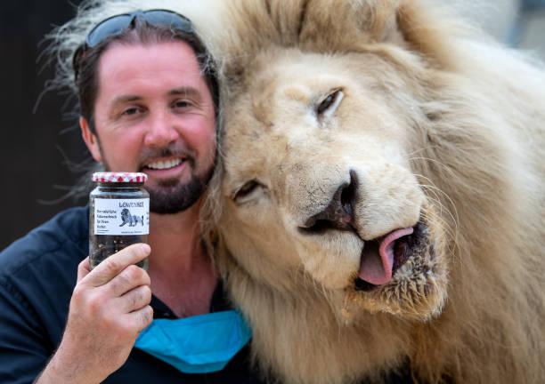 DEU: Circus Krone Sells Lion Droppings
