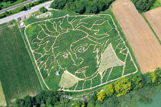 DEU: Beethoven As A Labyrinth In A Cornfield