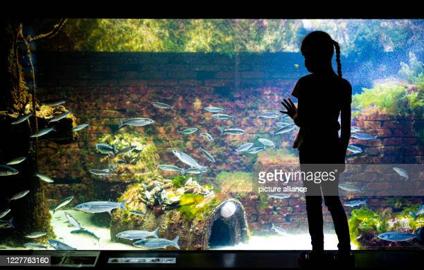 A girl is standing in the aquarium of the Bremerhaven Zoo at the sea and looks at the European oyster on an oyster reef in a large tank Photo Mohssen...