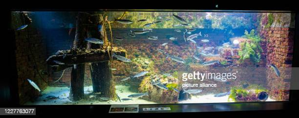 The European oysters on an oyster reef in the aquarium of the Bremerhaven Zoo at the sea Photo Mohssen Assanimoghaddam/dpa