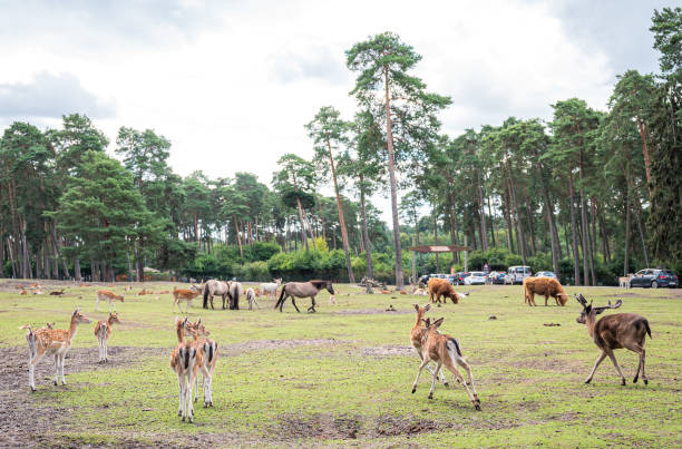 DEU: Animal And Leisure Park In Lower Saxony