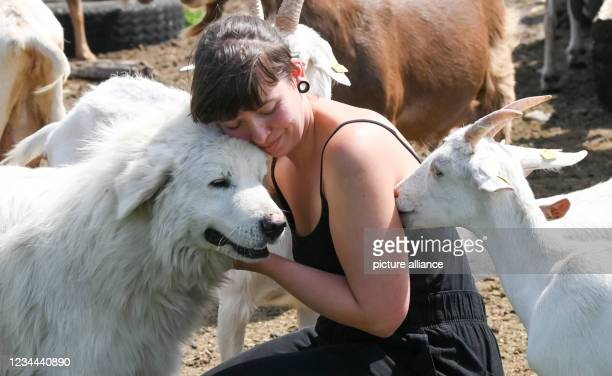 July 2021, Brandenburg, Flatow: Farmer Sarah Spindler cuddles with Maremmano Abruzzese shepherd dog Allessandro in her herd of goats on the grounds...