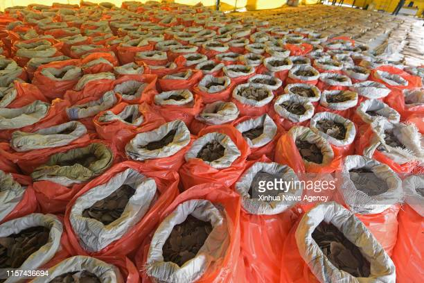 SINGAPORE July 23 2019 Photo shows the seized pangolin scales and elephant ivory in Singapore on July 23 2019 In the joint statement issued by...