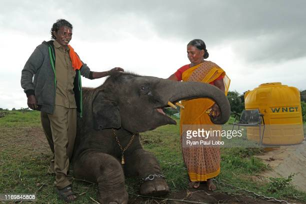 July 8th, 2019: Boma and his wife Belli share a moment with Raghu, a three year old elephant calf at the Theppakadu elephant camp at Tamil Nadu,...