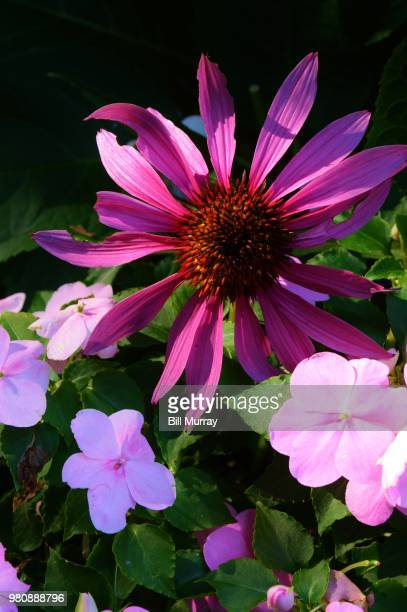 July Flowers Photo Getty Images