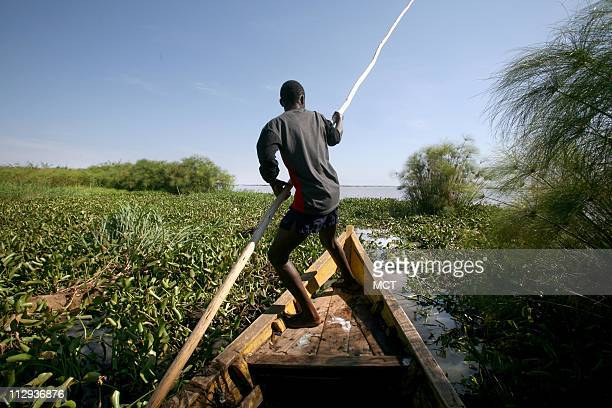 Juma Steven a parttime fisherman pilots his boat through thick blankets of water hyacinth Pollution of the lake is causing water hyacinth to grow out...