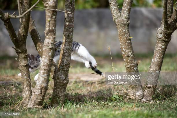 jump and hide! - um animal stockfoto's en -beelden