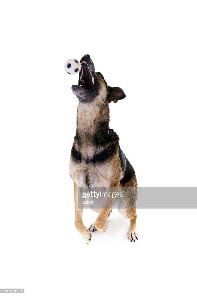 Jump ball : Stock Photo