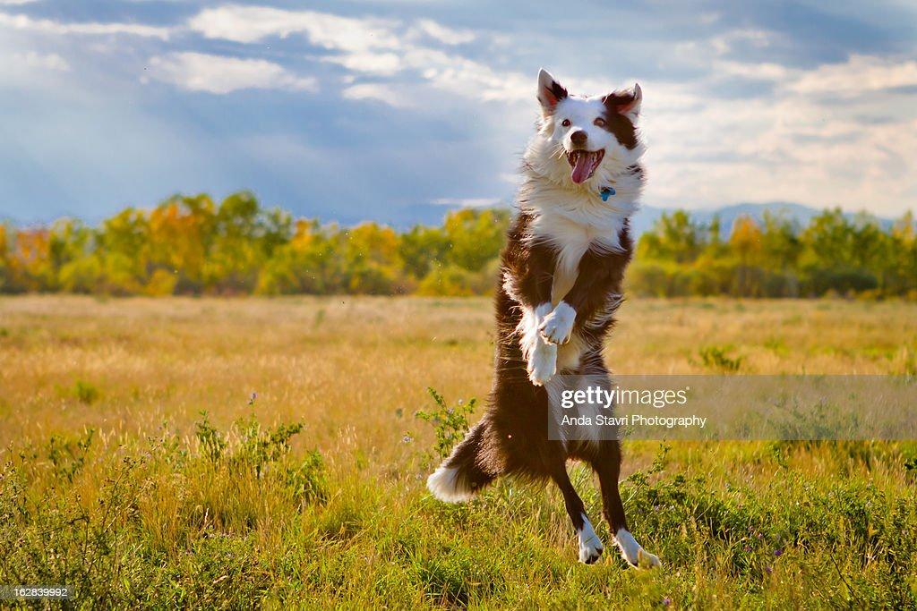 Jump for Joy : Stock Photo