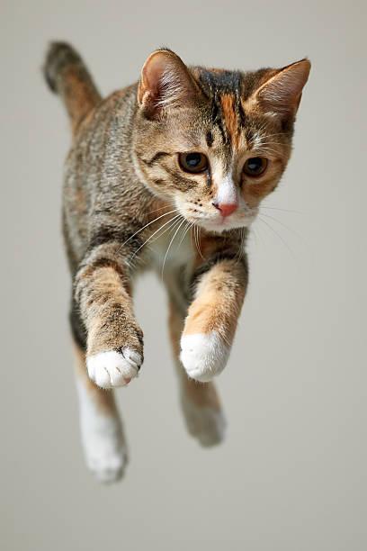 Jump Kitten Wall Art