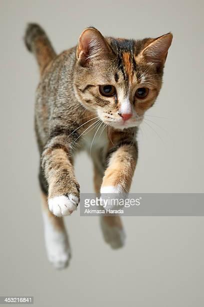 Jump kitten