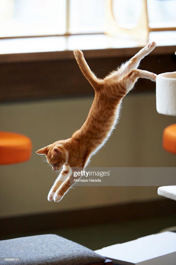 Jump off : Stock Photo