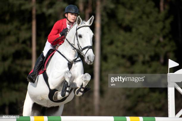 jump over the hurdle - dressage stock pictures, royalty-free photos & images