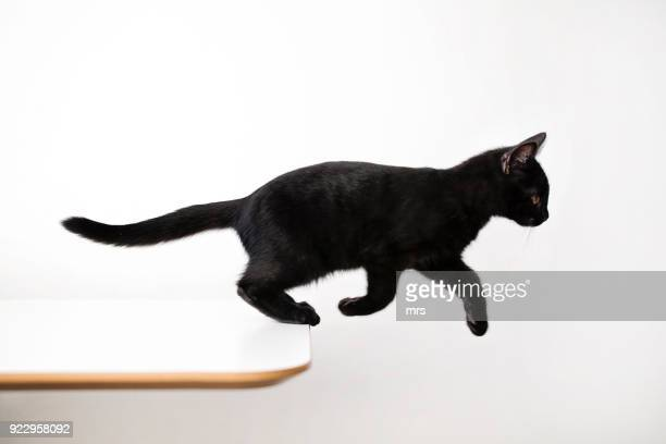 jumping cat - black cat stock photos and pictures