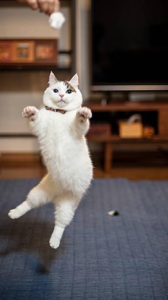 Jumping Cats Wall Art