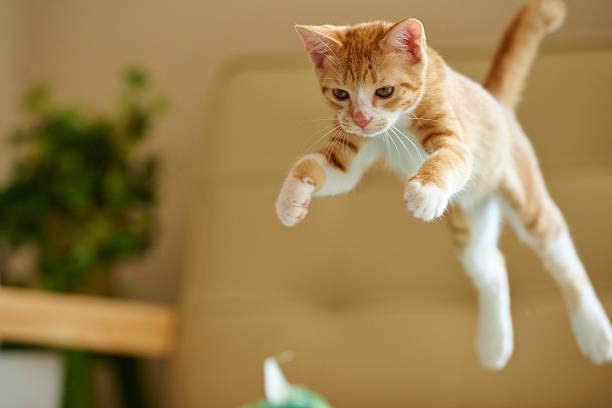 Jumping Ginger Kitten Wall Art